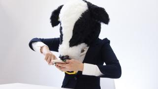 スマホゲームに必死なエト牛
