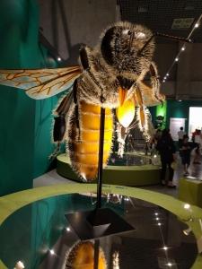 超でかいミツバチ