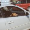 買い物中の飼い主を待つ犬