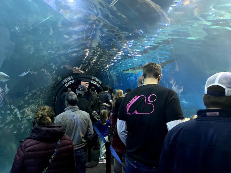 Adventure Aquariumの見どころの1つのShark Tunnel