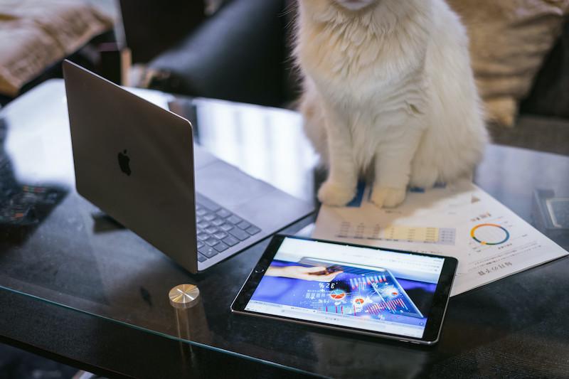 MacBook ProとiPadとネコ
